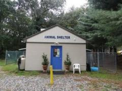 New London Dogs Move Into Waterford Animal Shelter